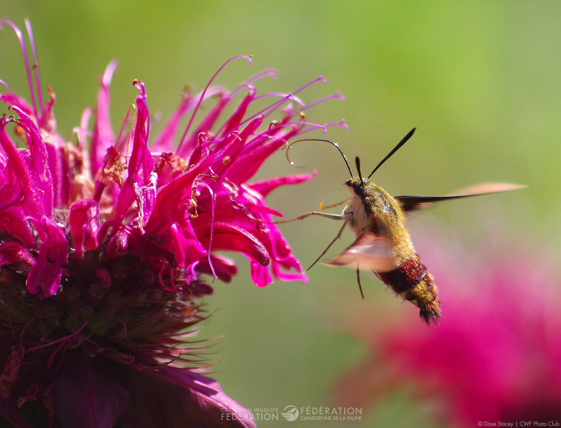 The Perfect Plants for Pollinators