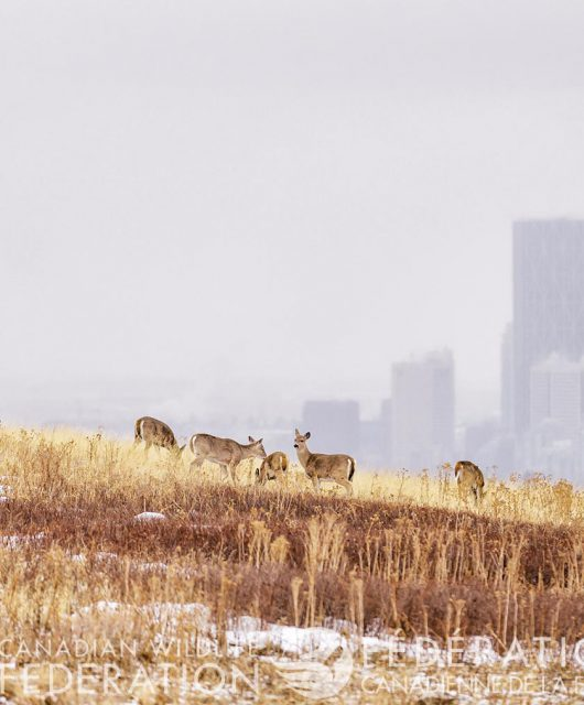 deer in winter field with city in background