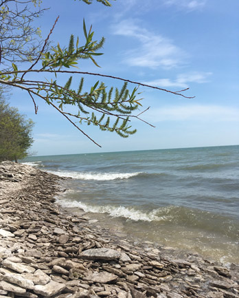 Is that the ocean? Pelee Isand and Lake Erie (Photo credits Kimberly McGough)