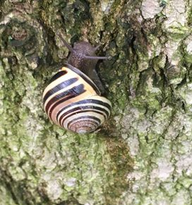 A snail and bug I got really excited about on Pelee Island! (Photo © Kimberly McGough)