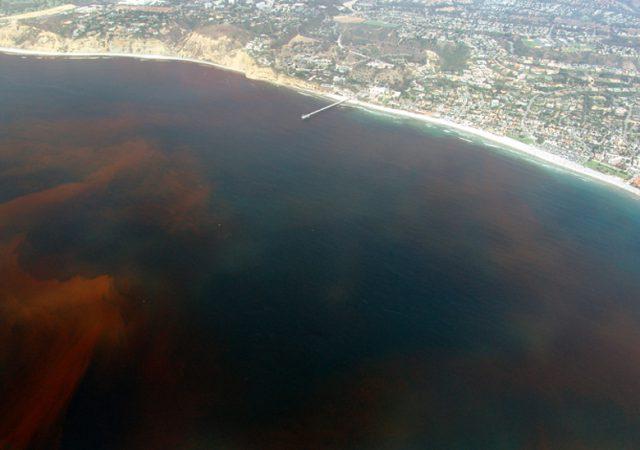 red tide california