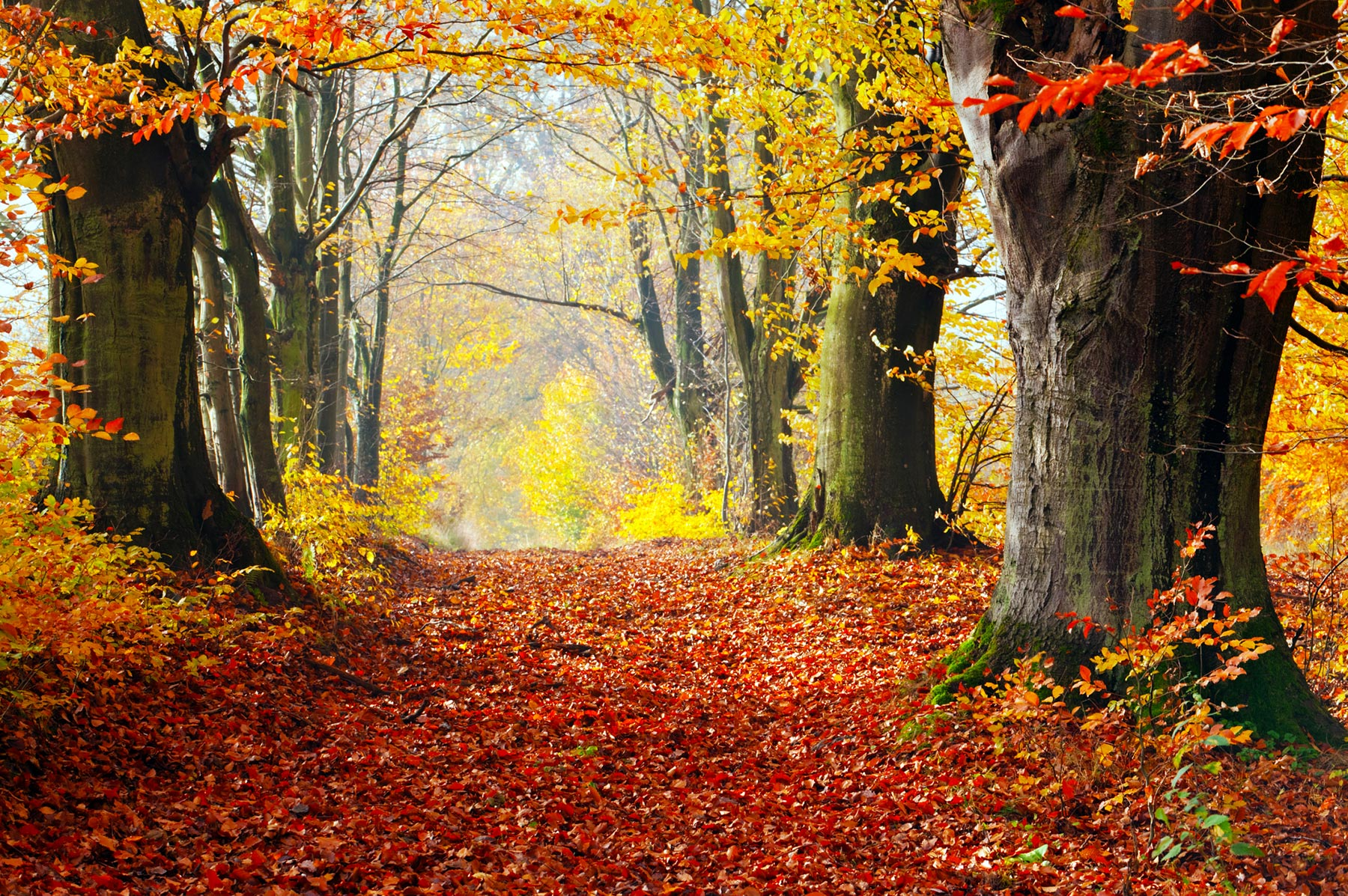 fall-autumn-forest-leaves – Your Connection to Wildlife