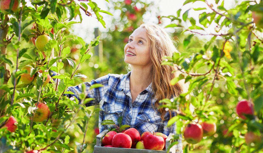 go apple picking