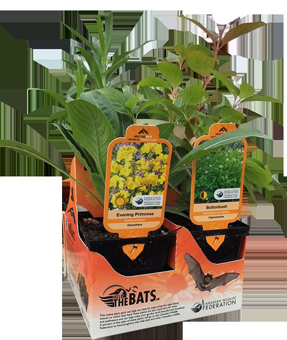 Plant for Bats