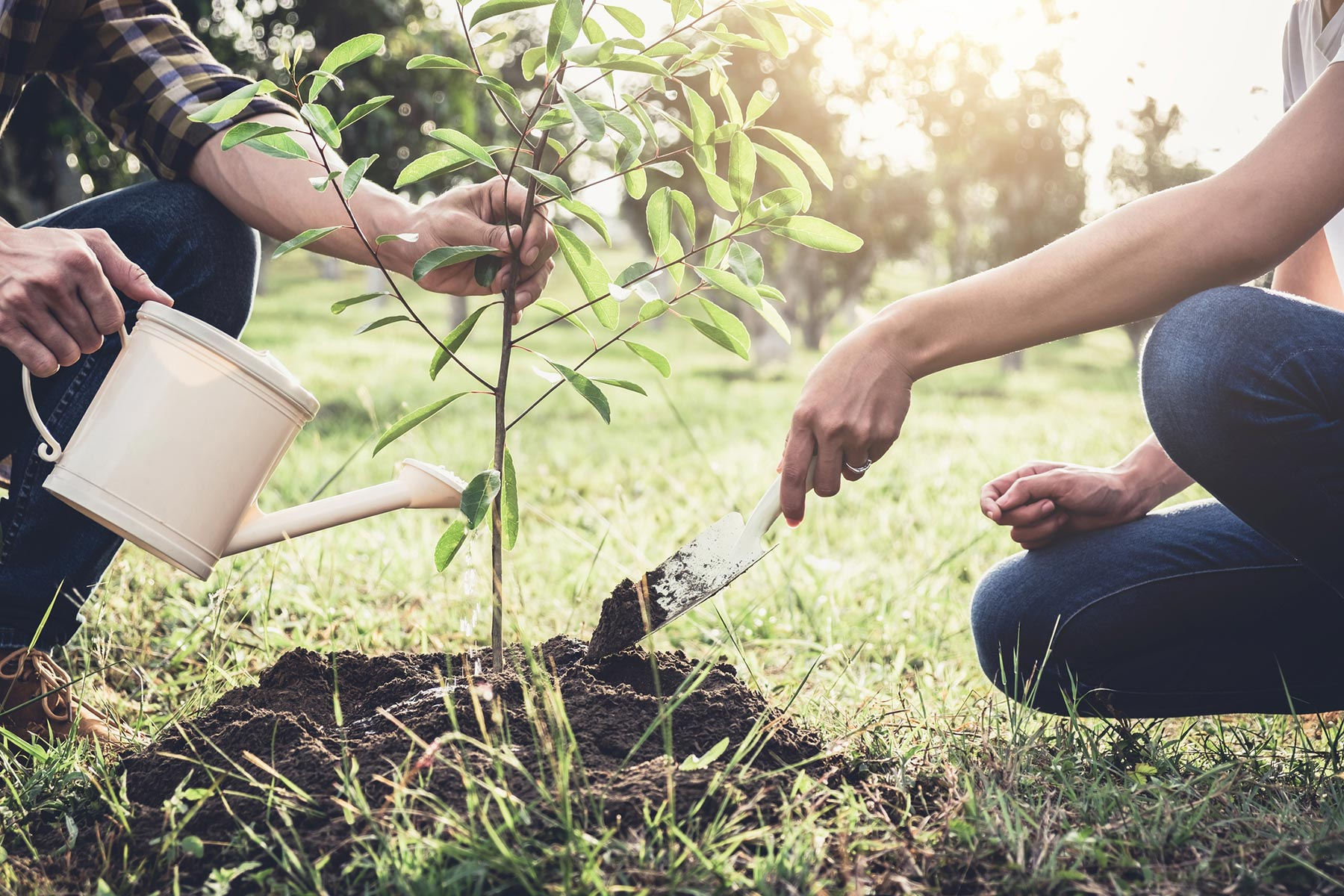 7 Steps to Properly Plant a Tree for Tree Day