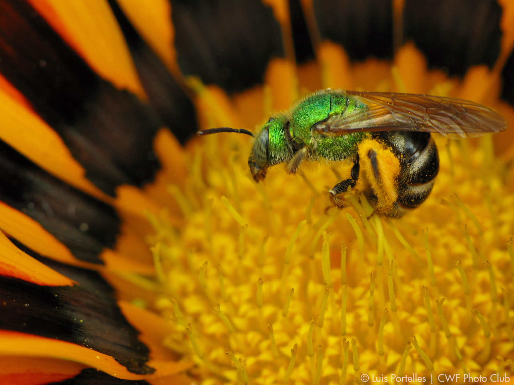 The Secret Lives of Bees and Wasps