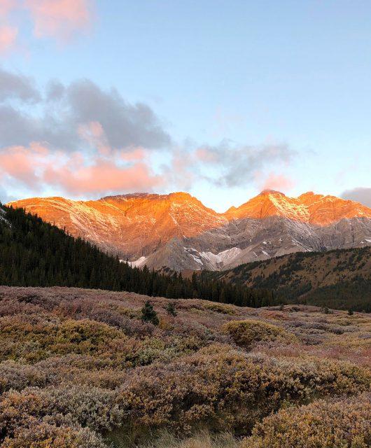 Sheep Wildlife mountains
