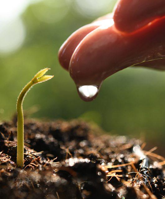 soil hand seedling water
