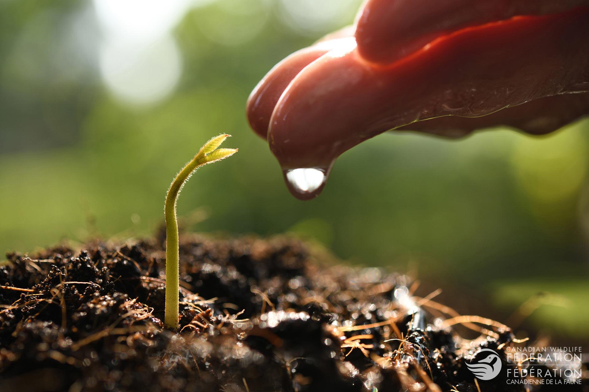 Celebrating World Soil Day