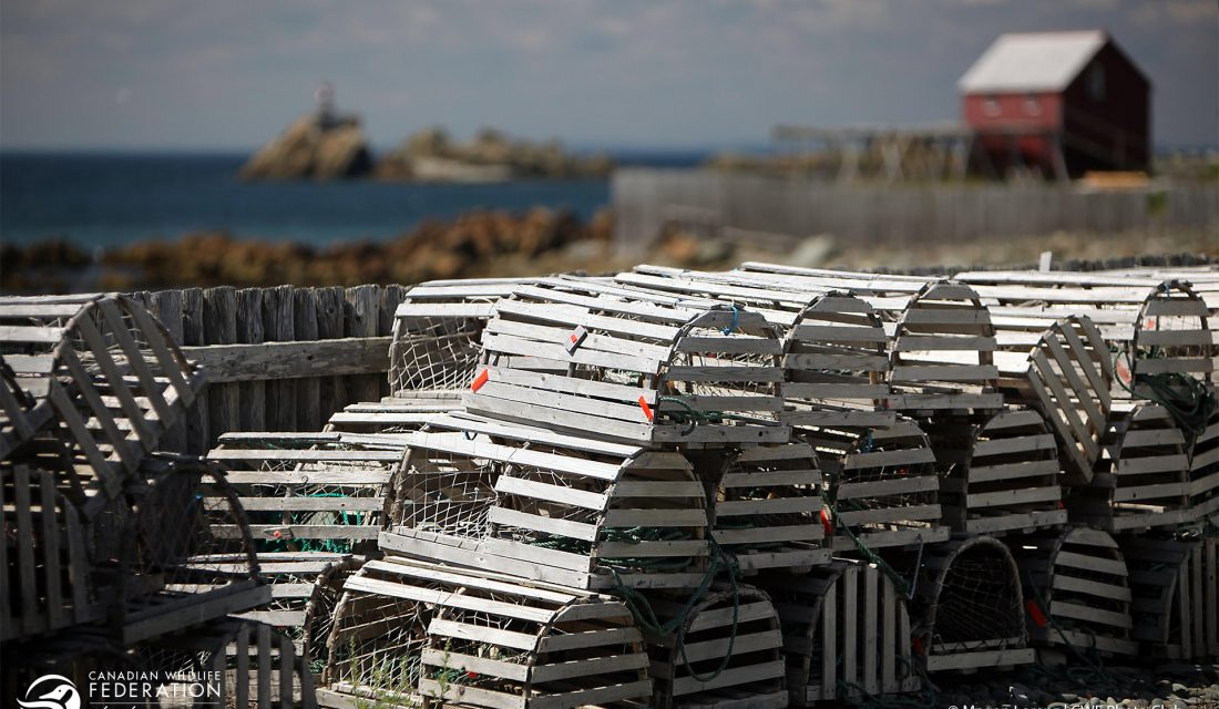 Lobster traps drying in the sun near Bonavista, NFLD. @ Megan Lorenz | CWF Photo Club