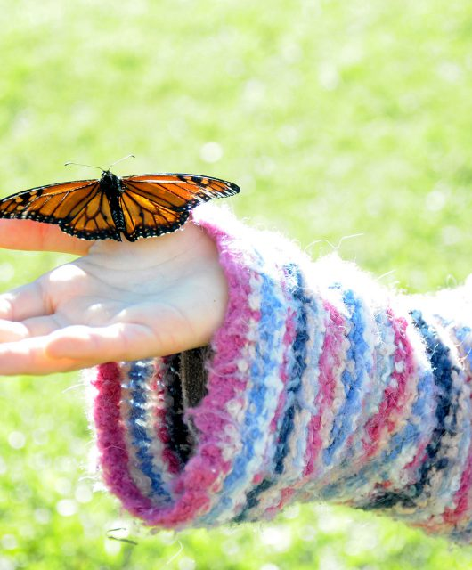 monarch-on-child-hand