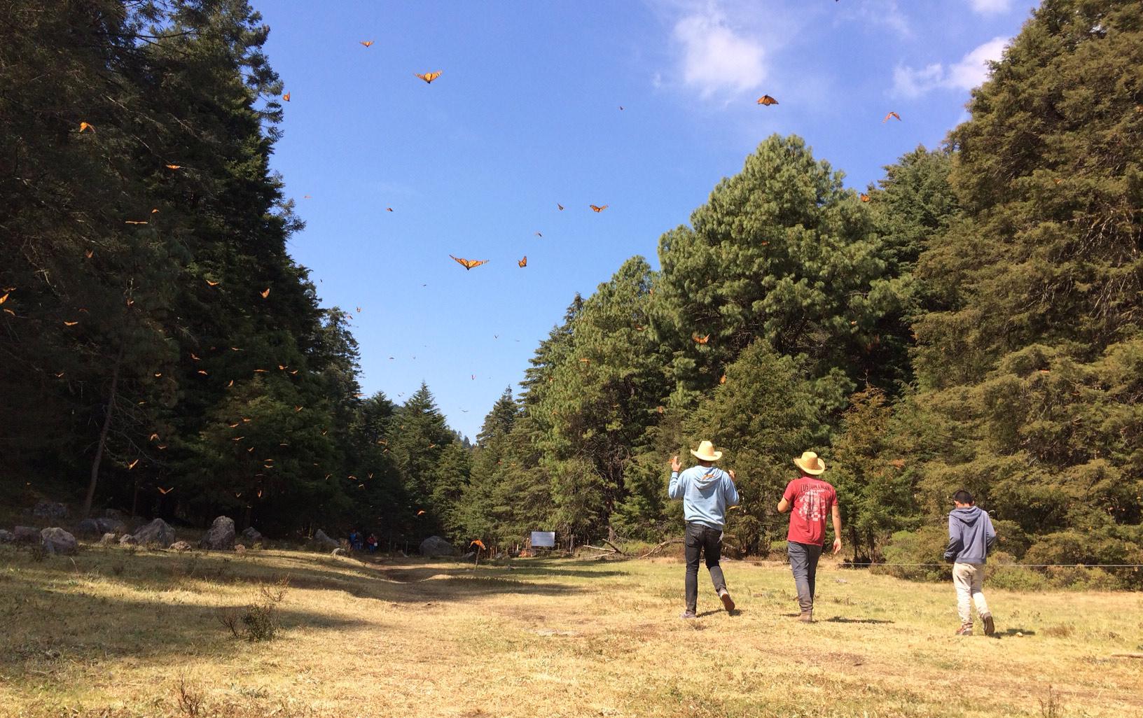 Hola Monarcha! Visite des régions d'hivernage du papillon monarque