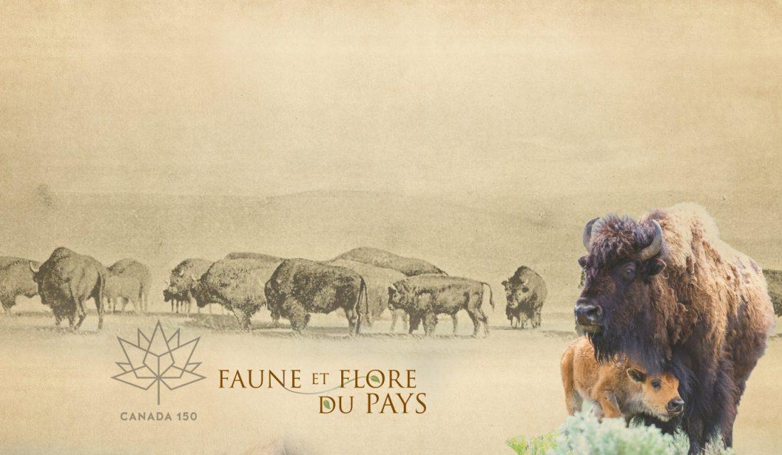 bison fr