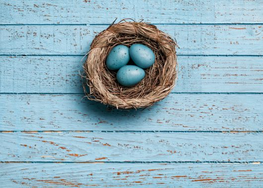 blue eggs nest