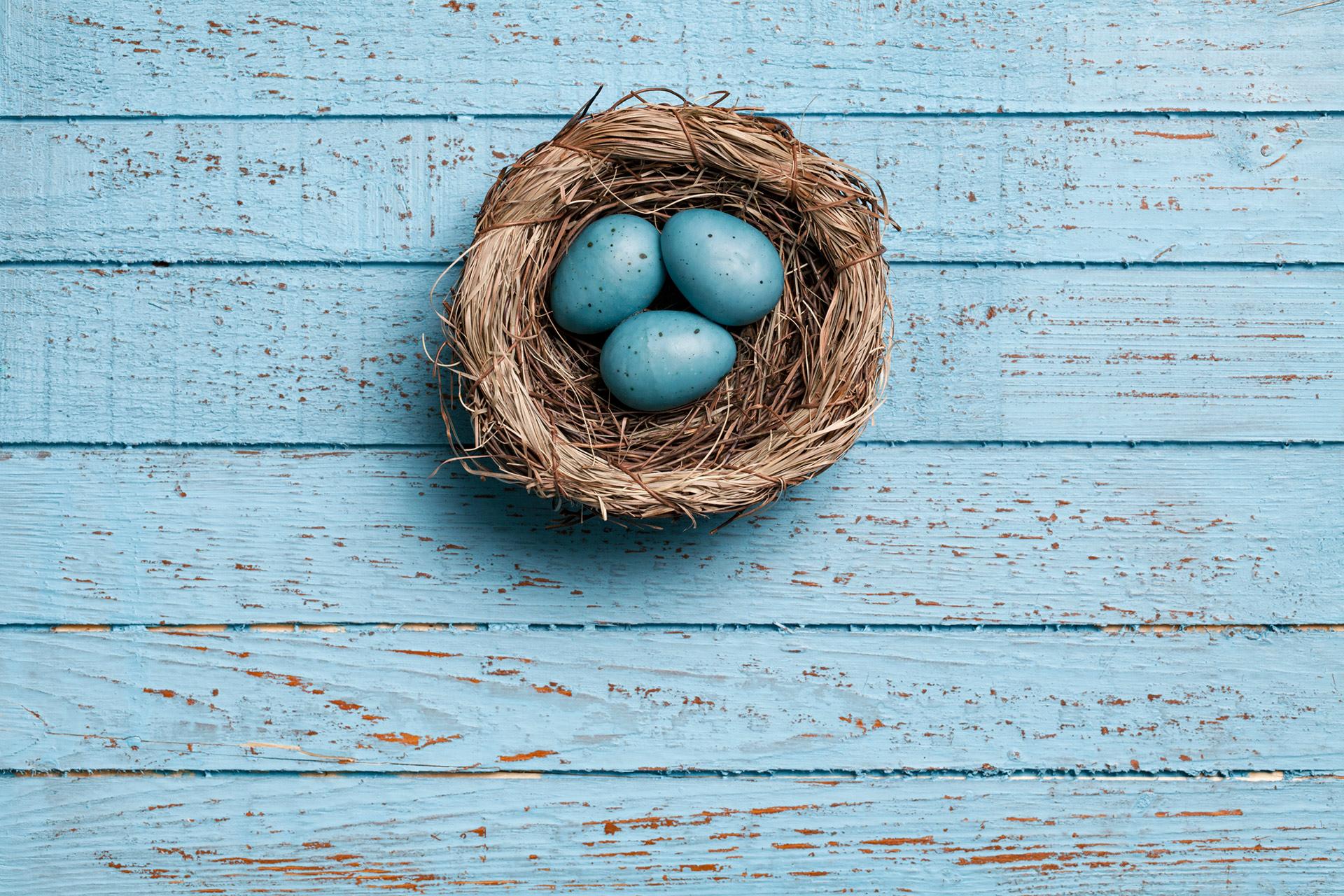 Scrambled Eggs: What Shell Colour Tells Us
