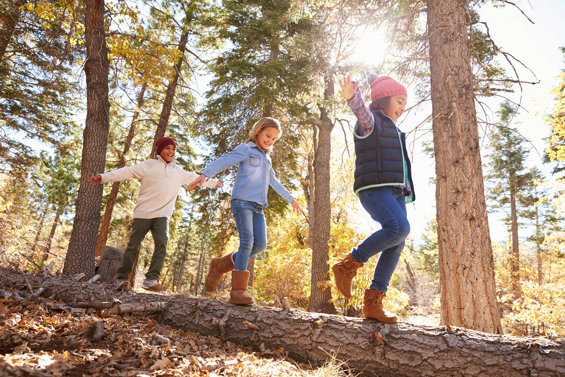 5 Activities to Do With Trees
