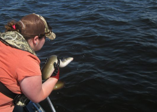 sarah releasing american eel into ottawa river