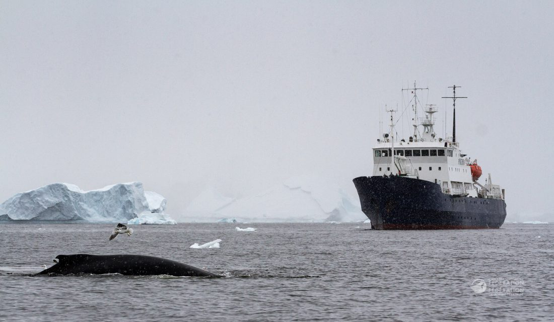 humpback whale in antarctica with ship