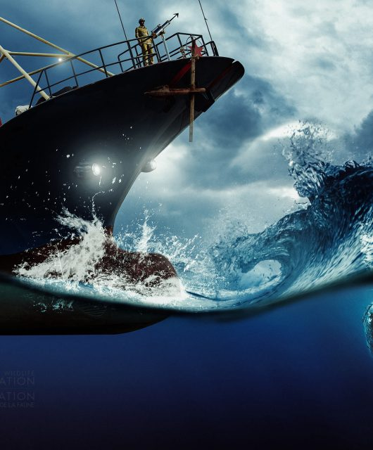 humpback whale and ship illustration