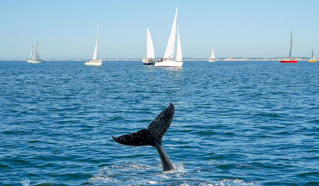 sailboat and whale tale