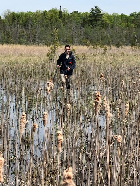 Tiptoe-ing through the cattails