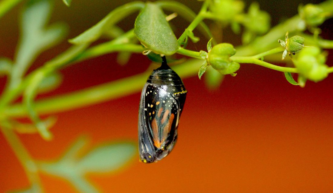 Monarch Butterfly   Photo: Brenda Doherty, CWF Photo Club