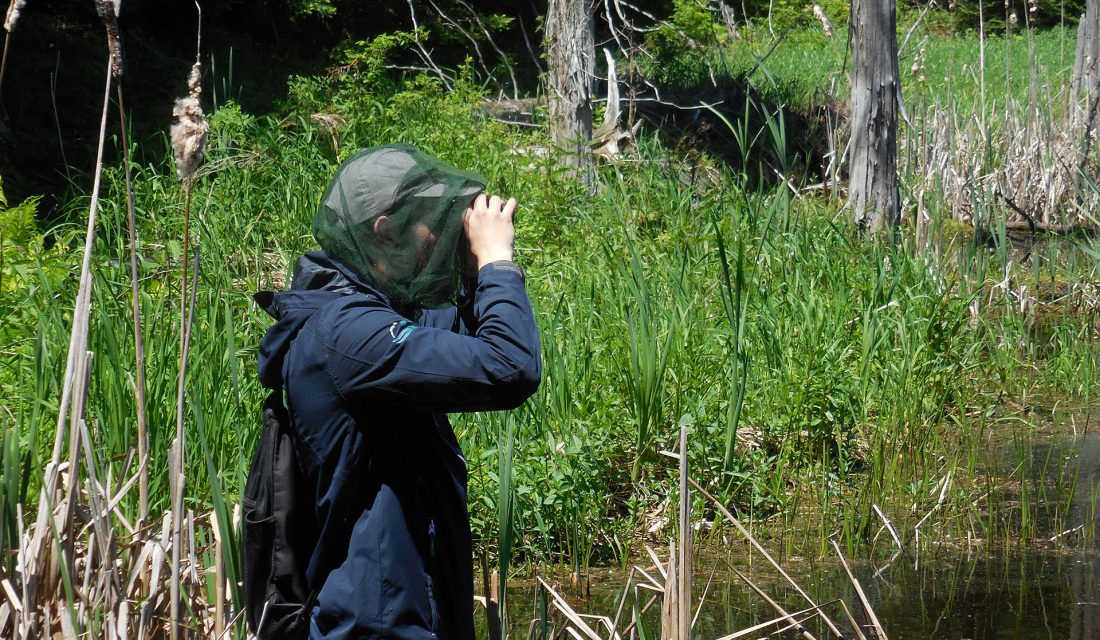 Looking for turtles in the wetland