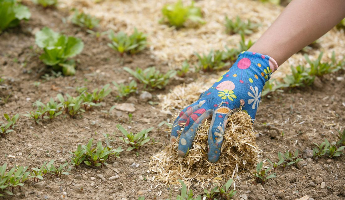 spreading mulch in a garden