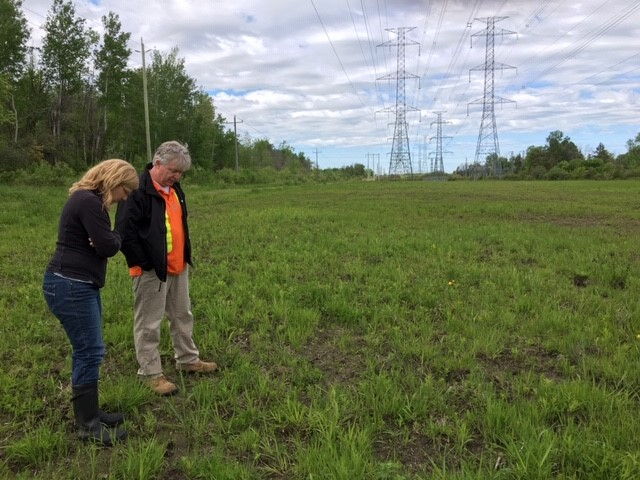 CWF and Hydro staff survey the pollinator project.
