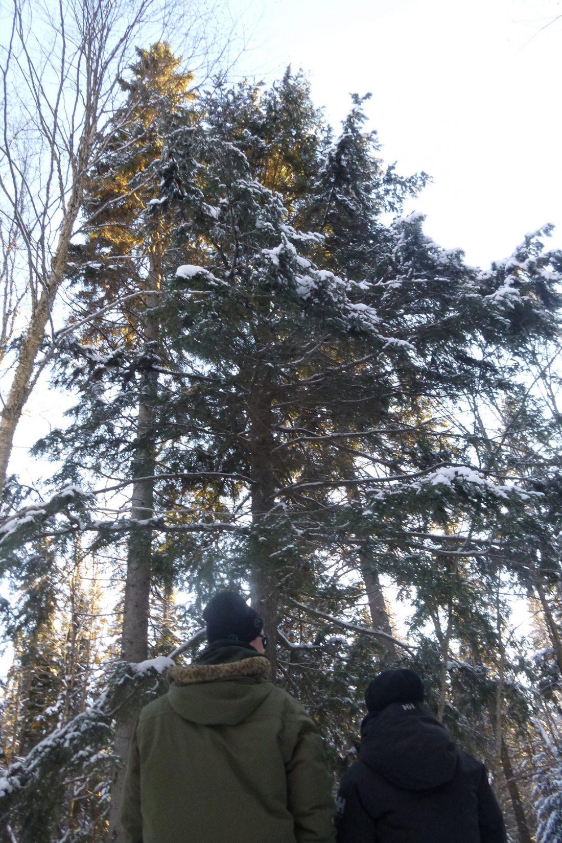 une chouette dans l'arbre