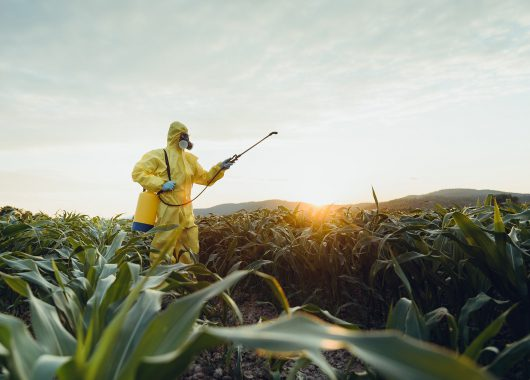 Sparying insecticide on field