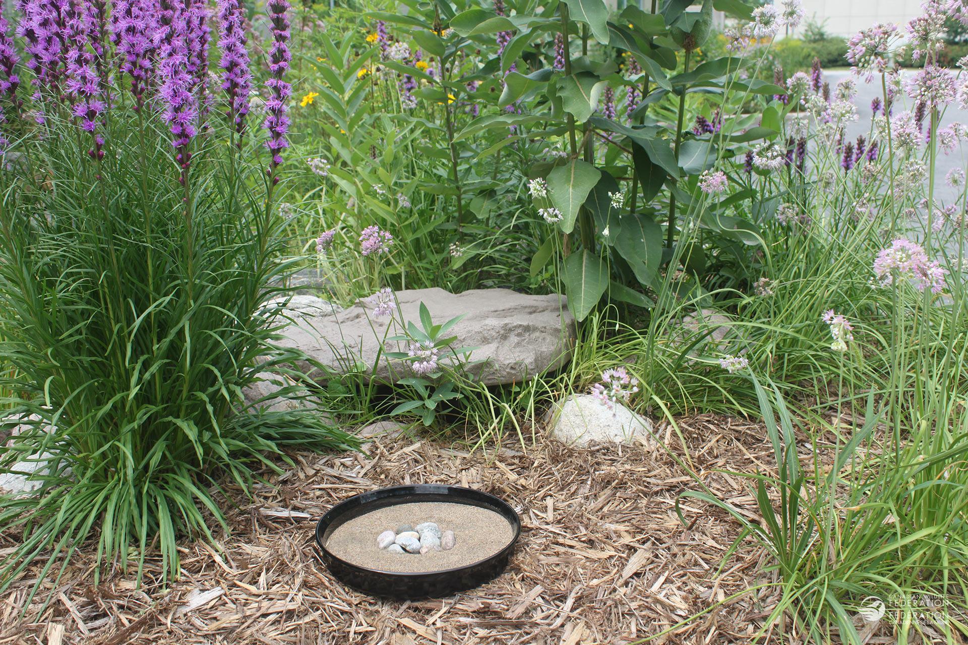Photos : Sarah Coulber, FCF Placez votre flaque de boue dans un endroit ensoleillé et à l'abri.
