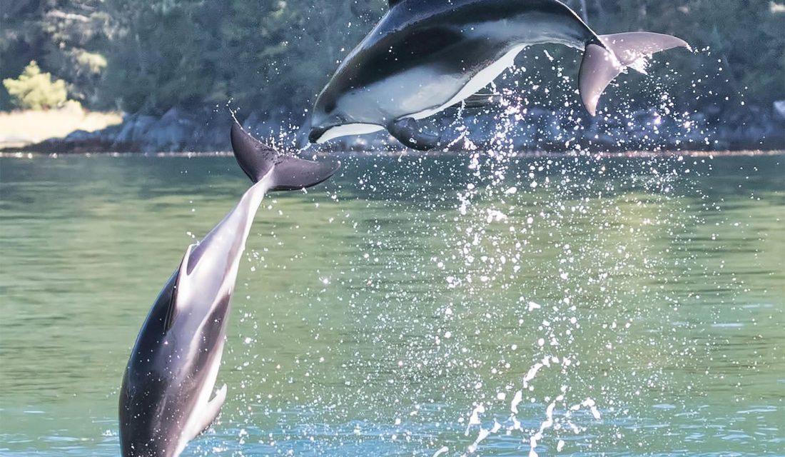 Dolphin @Stuart Clark