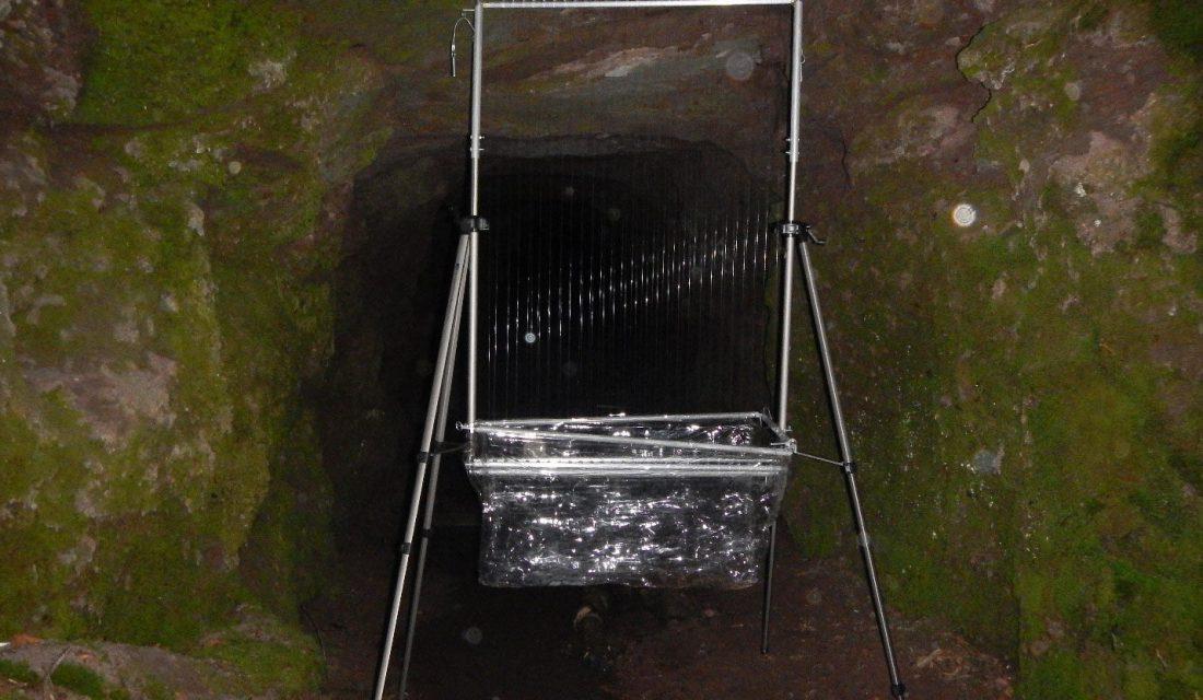 Des pièges harpes sont installés devant une mine abandonnée. @Karen Vanderwolf