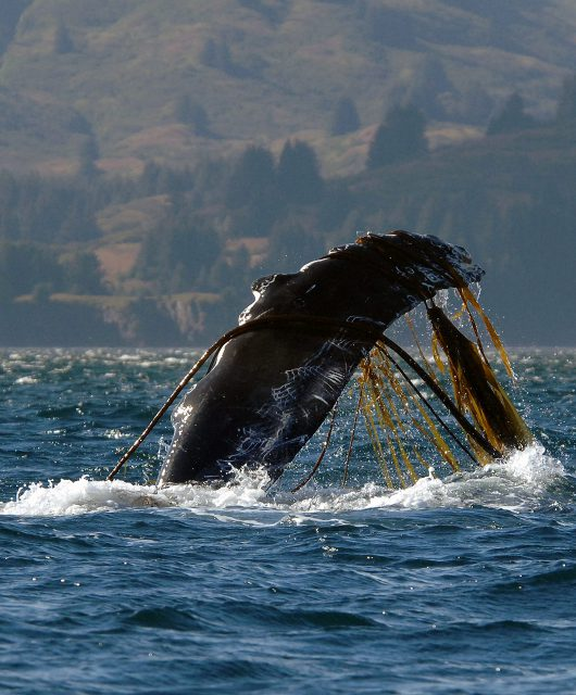 whale fin ropes