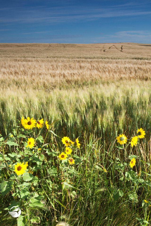 saskatchewan grassland