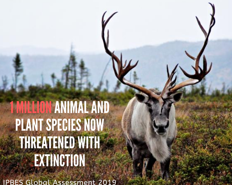 1 million plant and animal species now threatened with extinction.