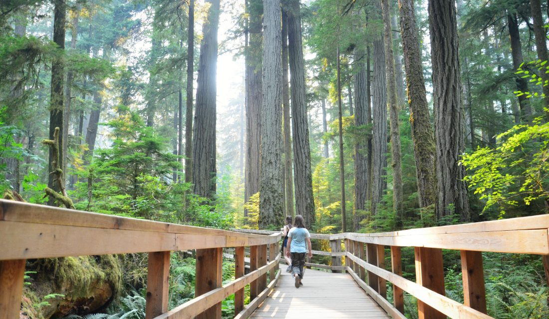 cathedral grove by pamela dobbs