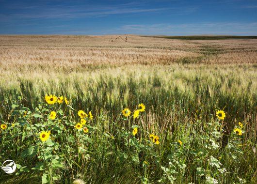 saskatchewan grasslands
