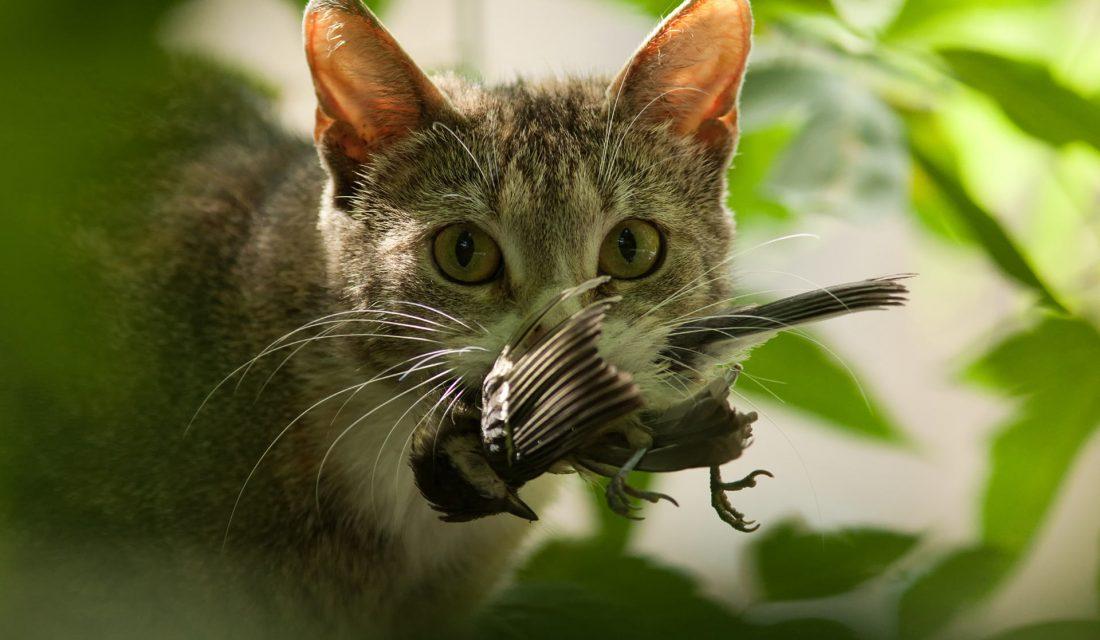 cat hunting bird