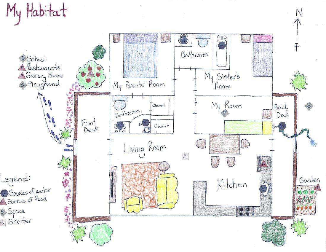 my habitat worksheet