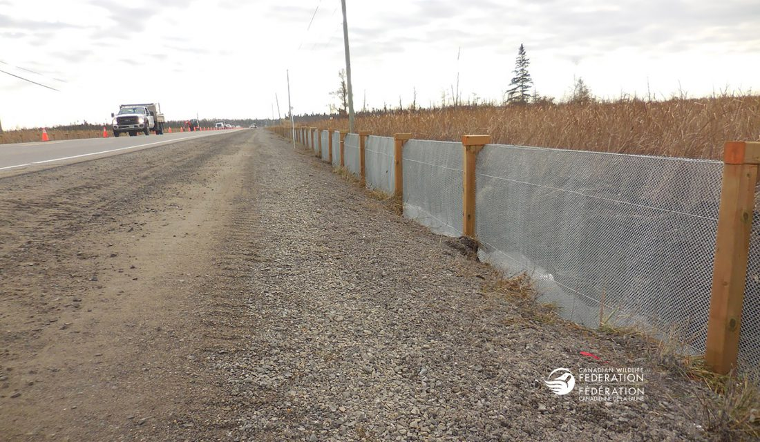 Turtle fencing installed along the major hotspot CWF documented south of Ottawa.
