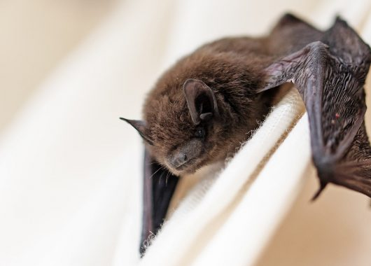bat on white cloth