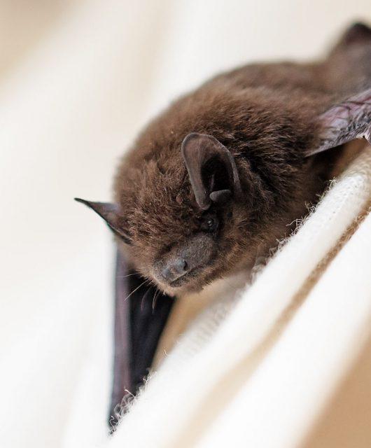 bat on white cloth
