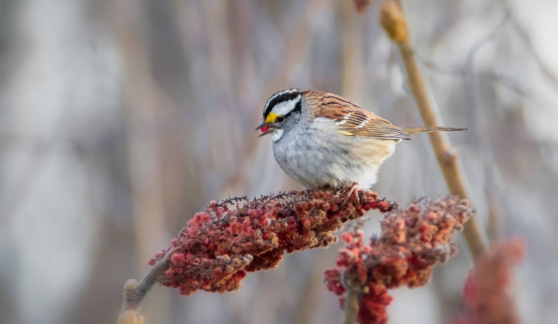 A variety of shrubs is a great way to help our feathered friends.