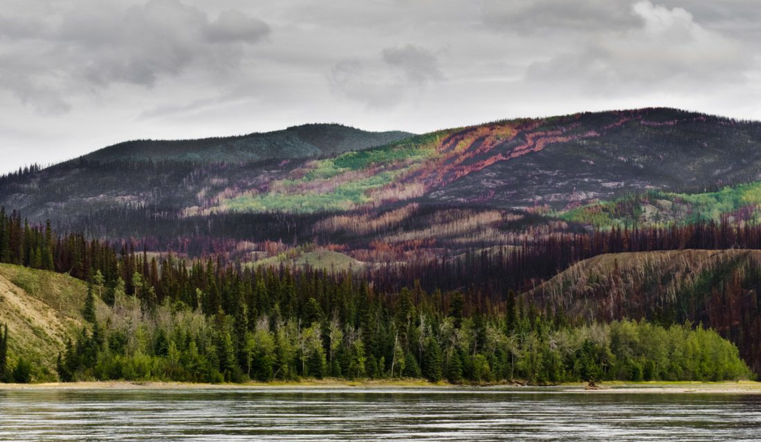 Yukon valley after a fire