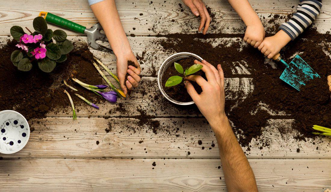 kids hands gardening