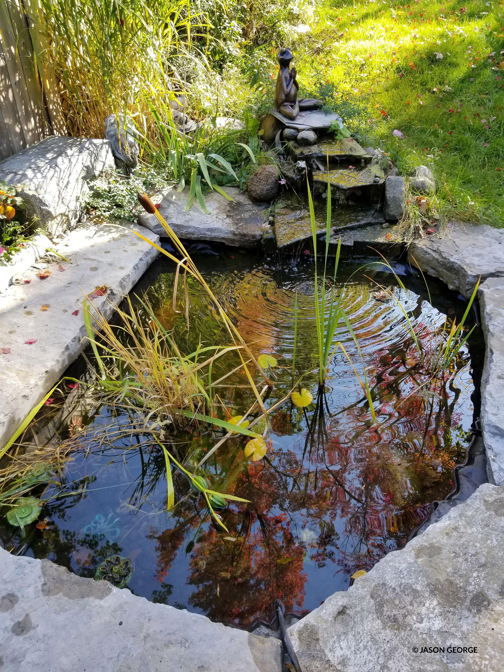 wildlife-friendly pond
