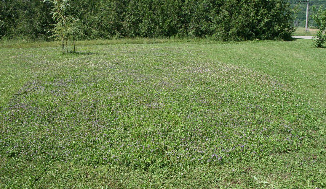 pollinator patch carolyn callaghan