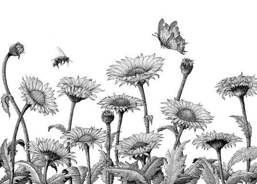 daisy field sketch